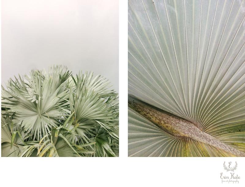 Palm Diptych Fine Art Print