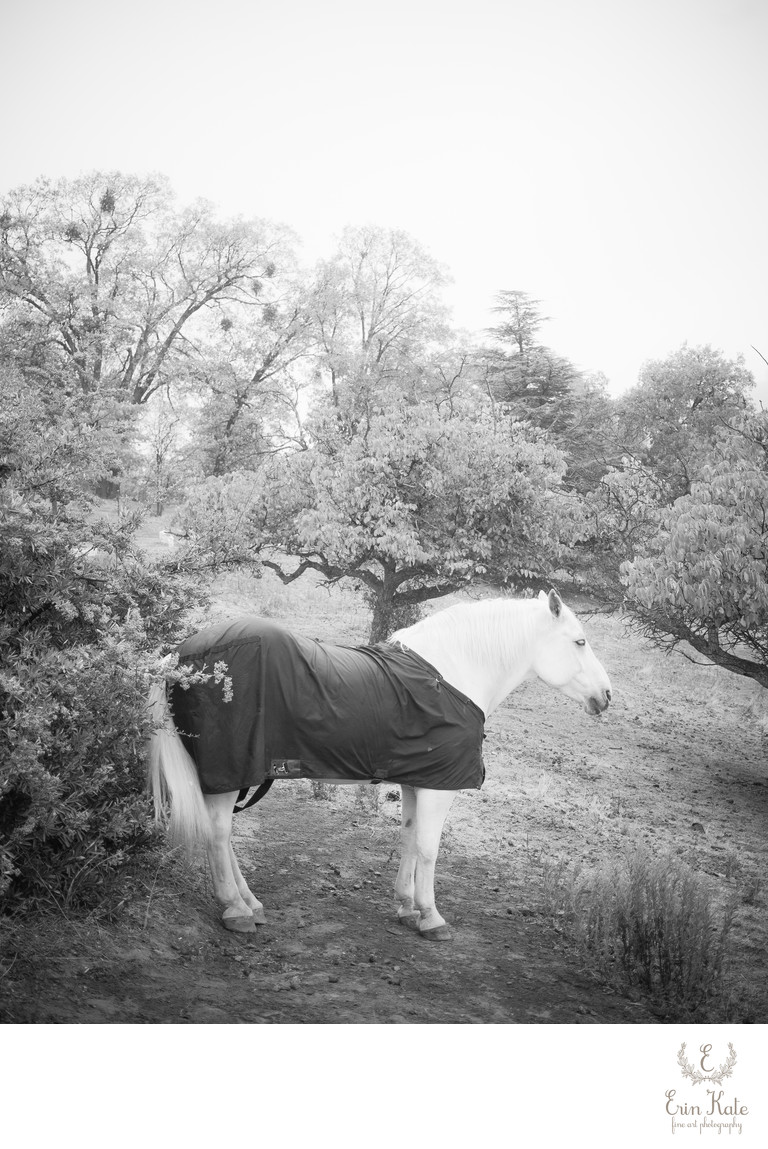 White Horse in Julian, California