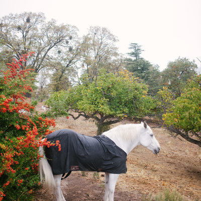 White Horse in the Fall