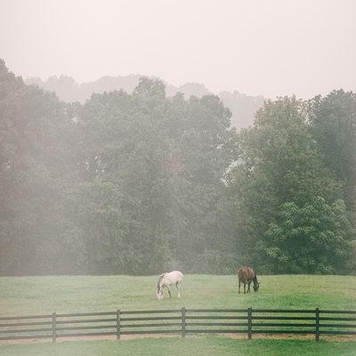 Horses Grazing in the Fog