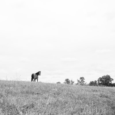 Horse in Pasture Photograph