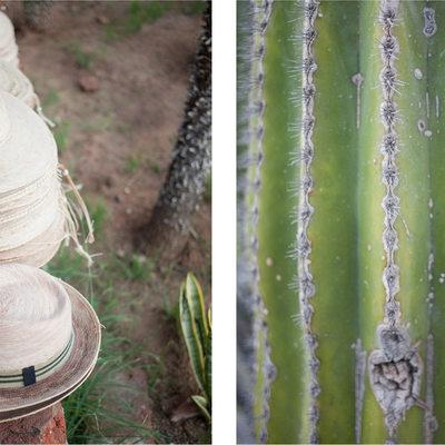 Hats Cacti Diptych Fine Art Print