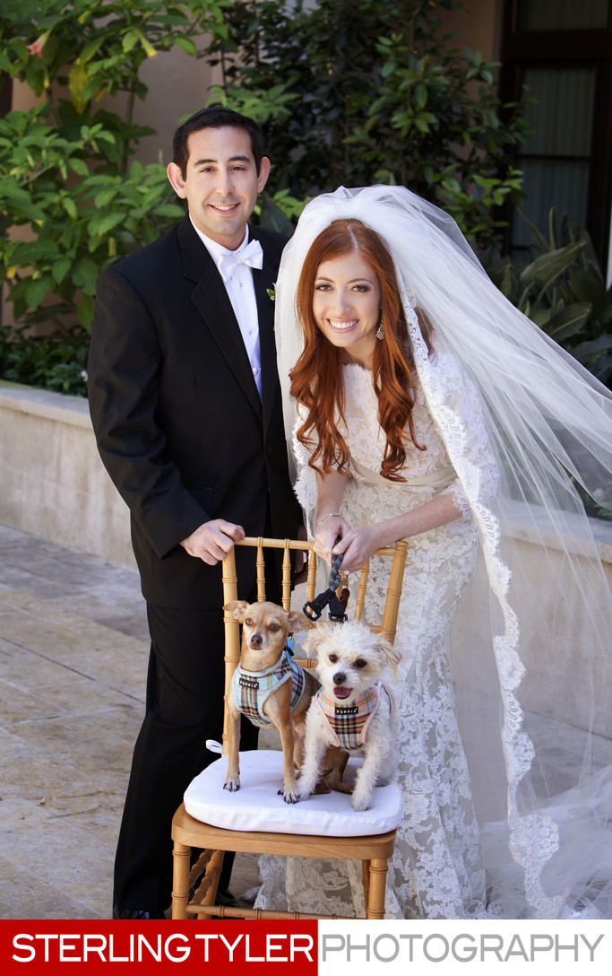 bride and groom with dogs in beverly hills