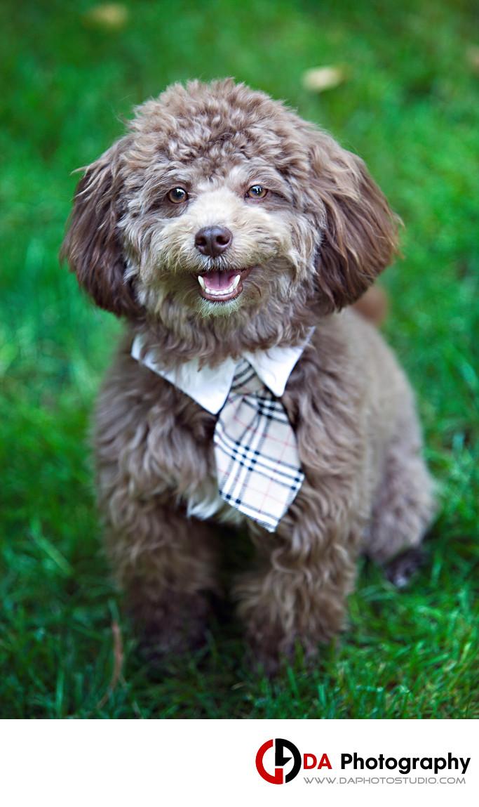 Mississauga Dog Photo
