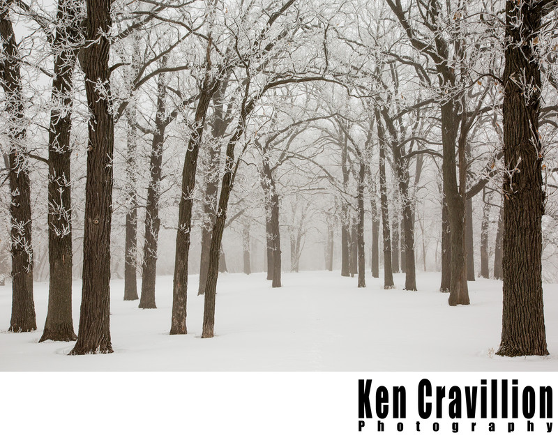 Hoar Frost Oshkosh Wisconsin Photograph