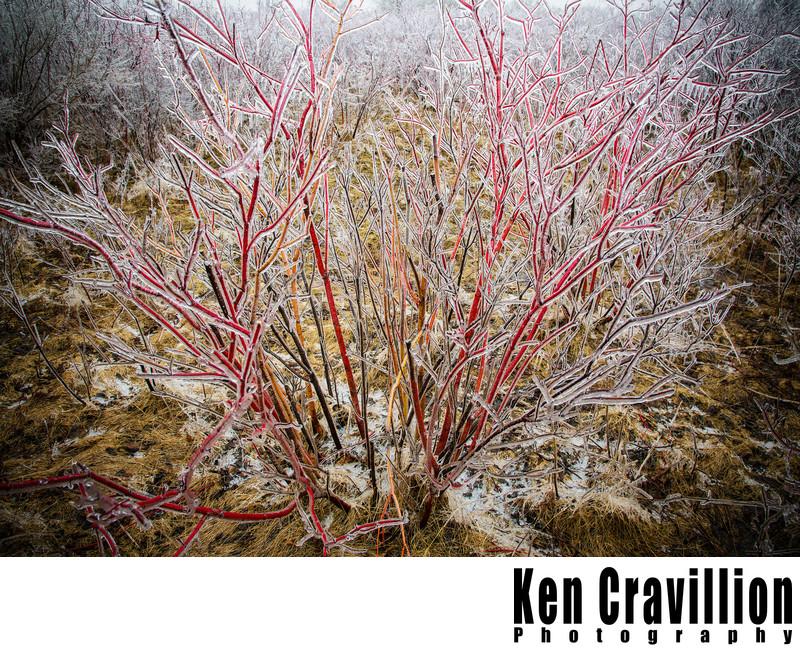 Oshkosh Wisconsin Winter Ice Storm Photo