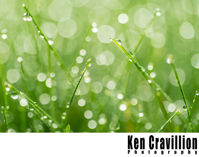 Morning Dew Drops on Grass Oshkosh