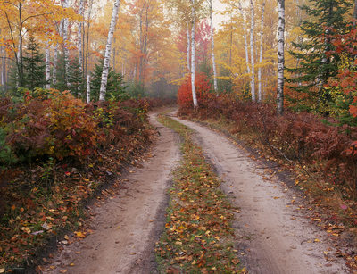Fall Color Forest Road Munising Upper Michigan Photo