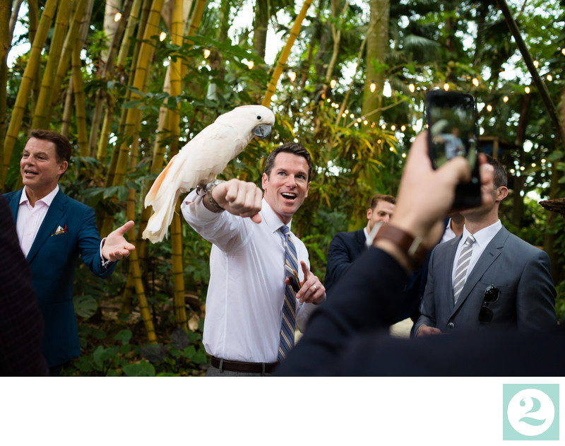 Wedding Guest Holds Parrot at Cocktail Hour