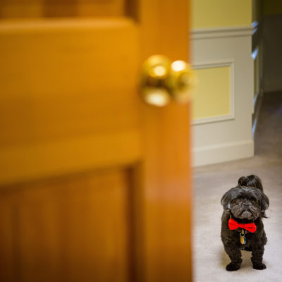 Little Black Wedding Dog with Red Bow Tie