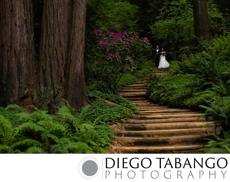 Nestldown Wedding Ceremony Photographer in Redwoods