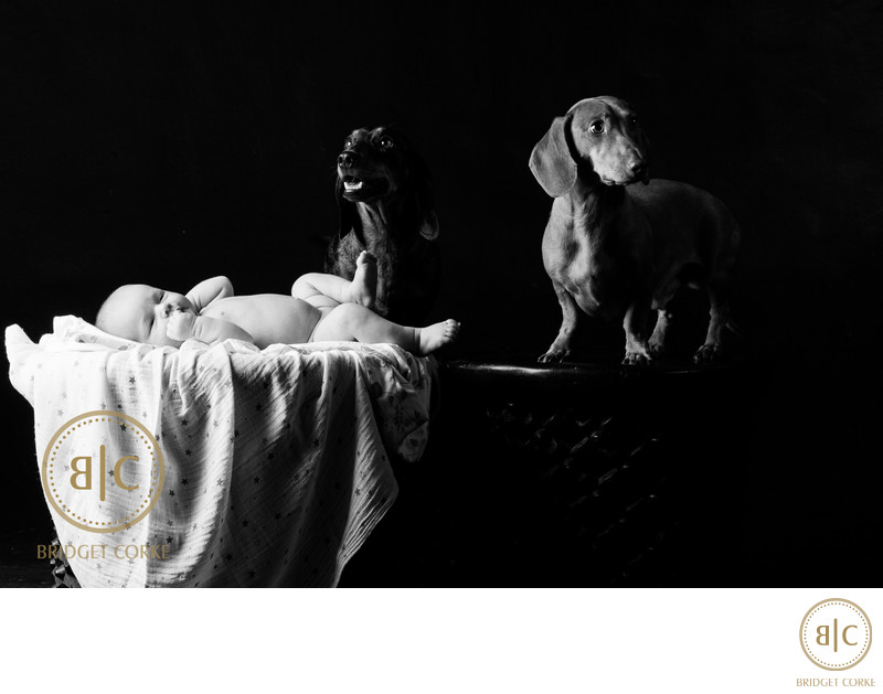 Newborn Photographed With Pets In Johannesburg Studio