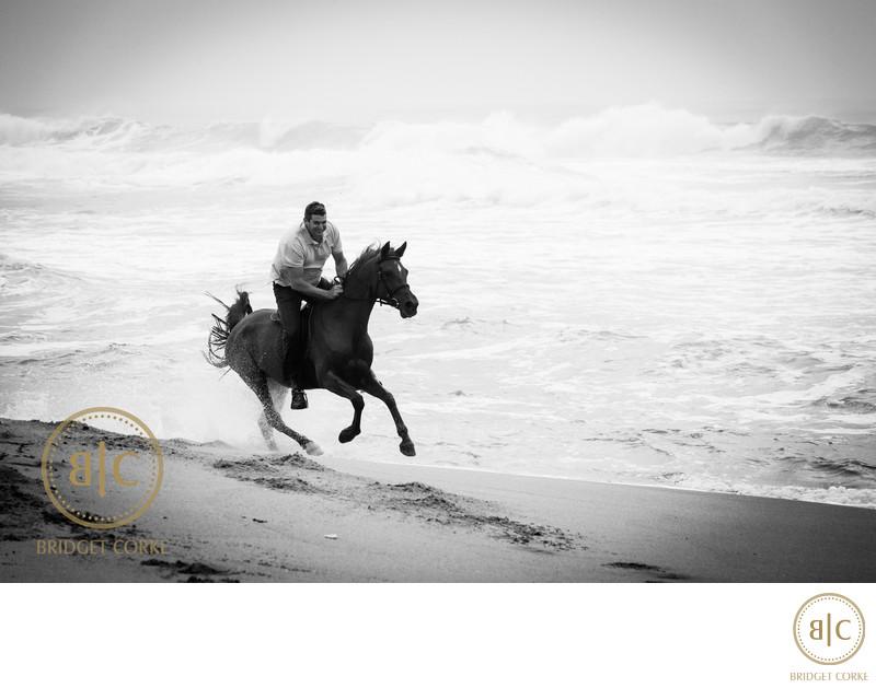 Top Sheffield Horse Photographer Johannesburg