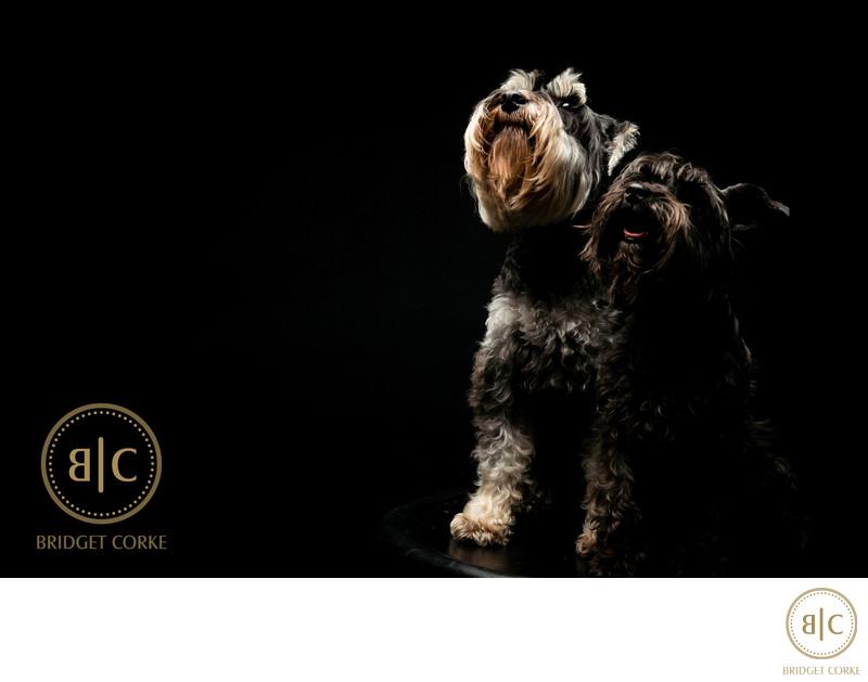 Top Schnitzel Family Dog Johannesburg Studio Photographer