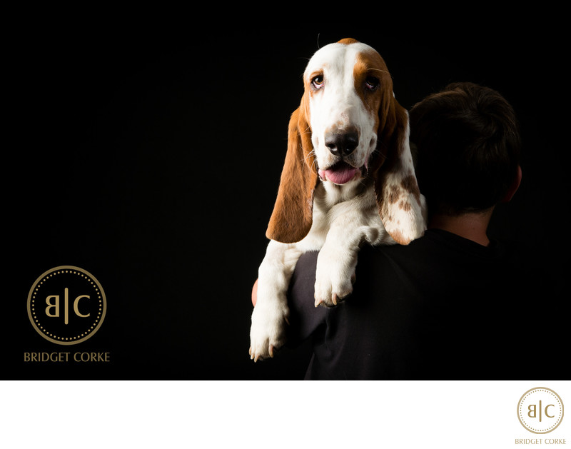 Best Hush Puppy Dog Johannesburg Studio Photographer