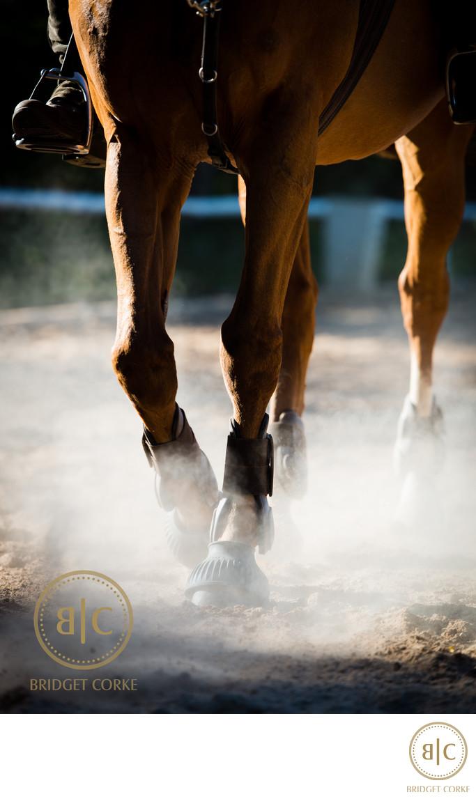 Top Johannesburg Horse Photographer Johannesburg