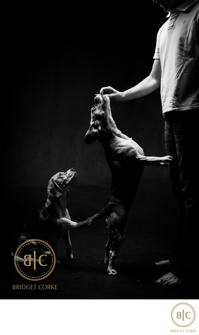 Johannesburg Studio Dog Photography