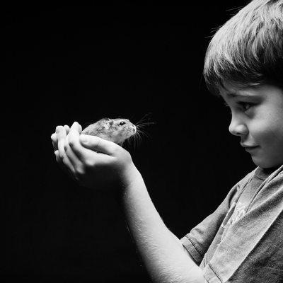 Quirky Studio Hamster Pet Shoot Photographer