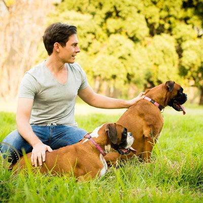 Boxer Dog Pet Photographer Johannesburg