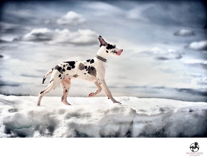 Great Dane Dog on a Glacier