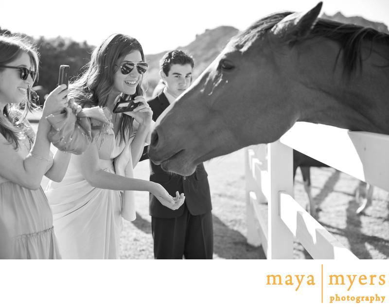 Saddlerock Horses Weddings Malibu