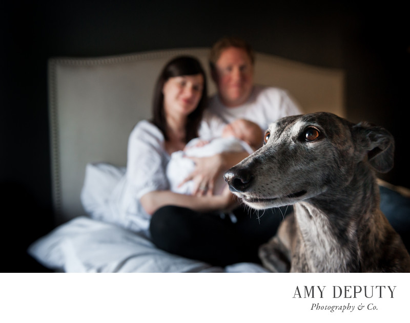 Family Newborn & Pet Photography, Baltimore & DC