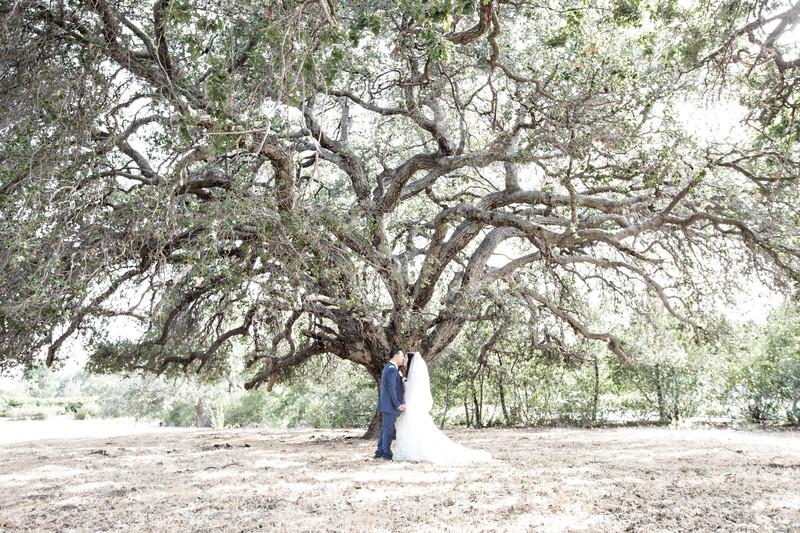Wedding Kiss Under an Oak Tree