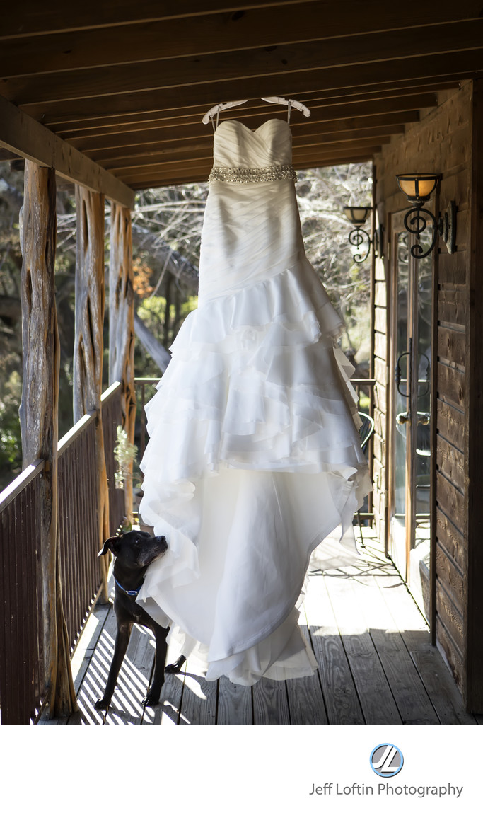 Wedding dress and dog hideout on the horseshoe