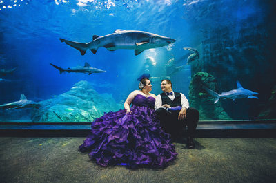 Aquarium Wedding with Sharks