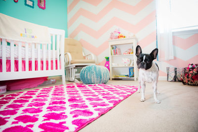 baby girl newborn room with a dog