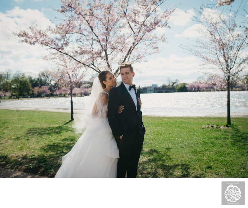Cherry Blossom Wedding Pictures in Washington, DC