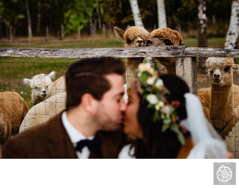 Hannover Germany Destination Wedding at an Alpaca Farm