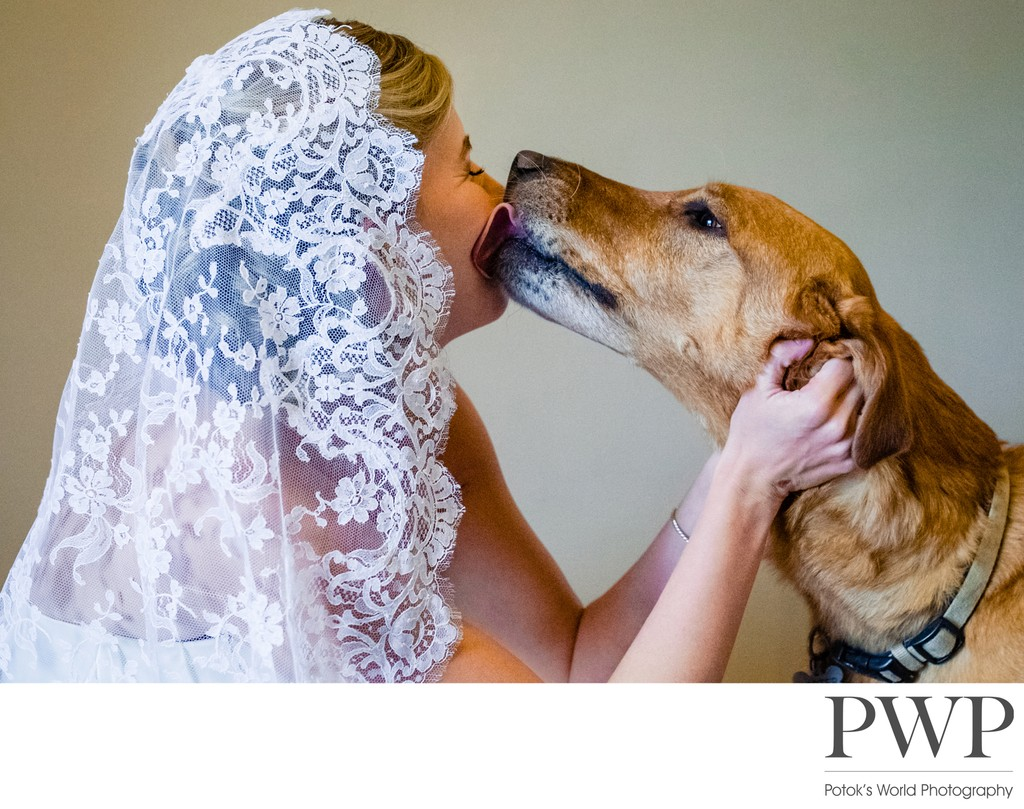 Wedding Photos with Dogs in Northern Virginia