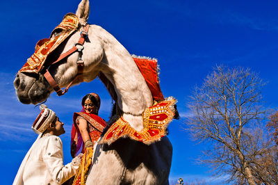 Rich Indian Wedding With Horse and Vibrant Colors