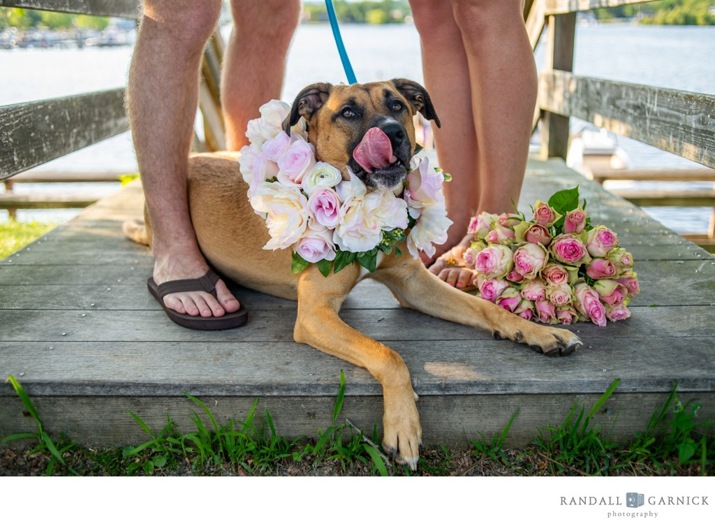 NH engagement photos with your dog