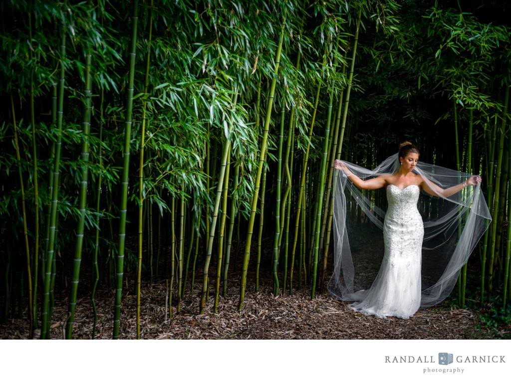 Blithewold Mansion bamboo forest wedding photo
