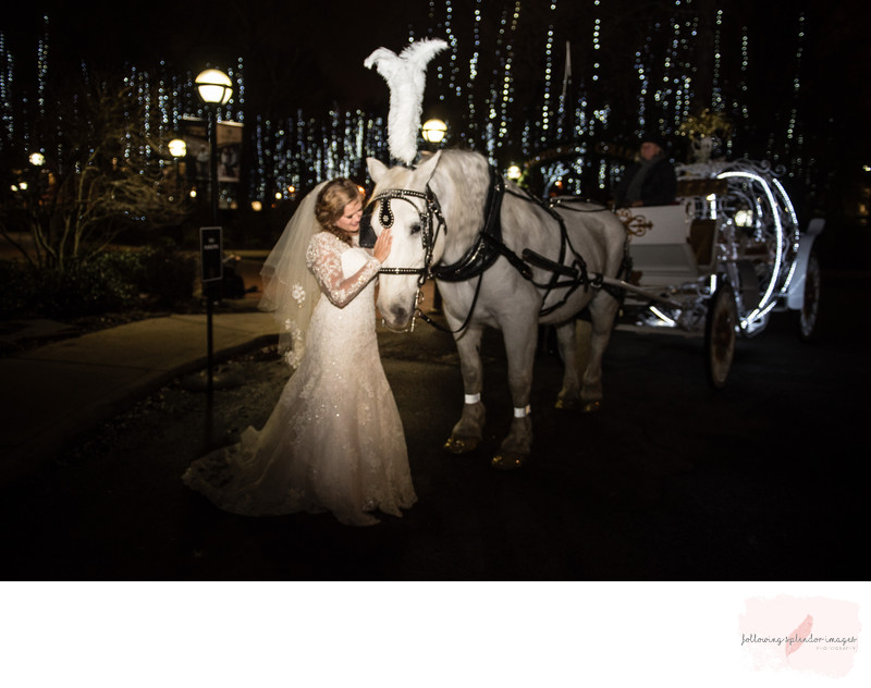 Bride with Horse and Carriage Harding University Wedding