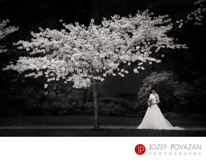 Cherry Blossoms Wedding Portrait Vancouver bride at UBC