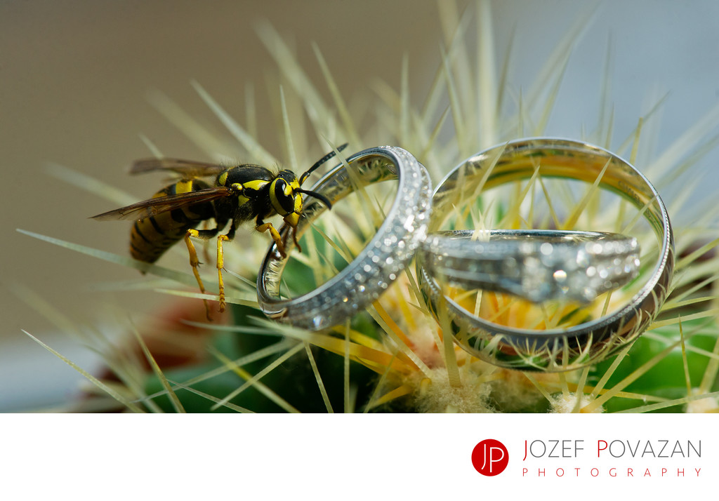 Wasp sucking wedding ring on cactus plant details macro