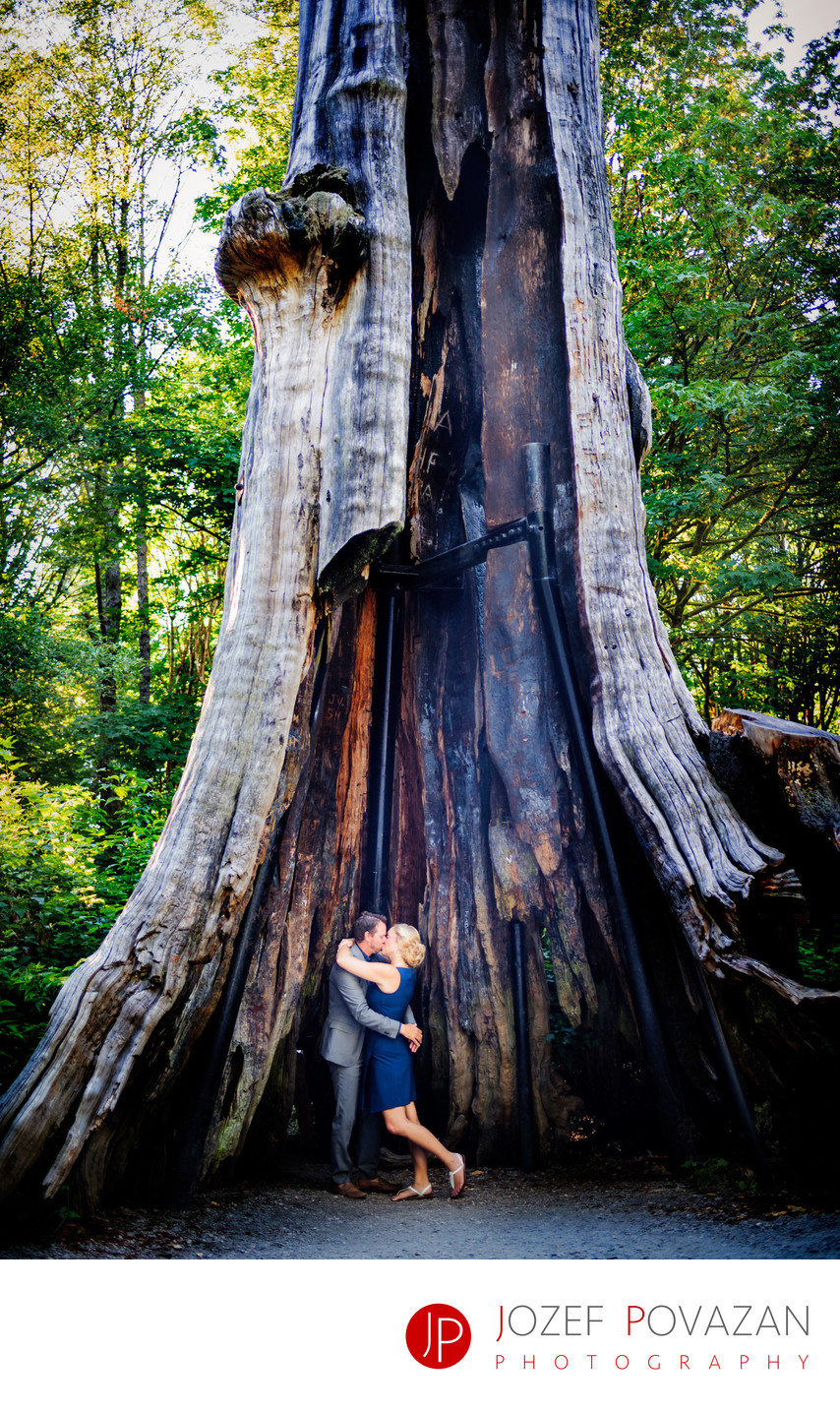 Romantic Stanley Park Hollow Tree Engagement Photography