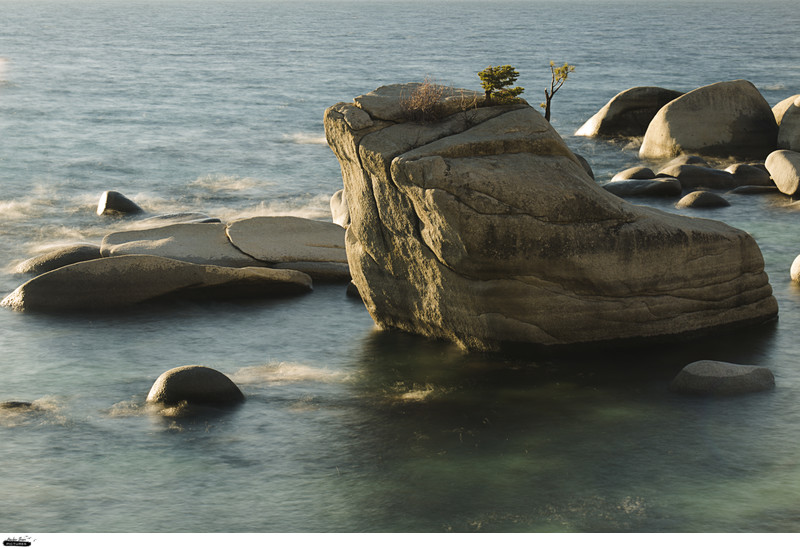 Bonsai Rock Tahoe Nature Photography Ruta Swanson