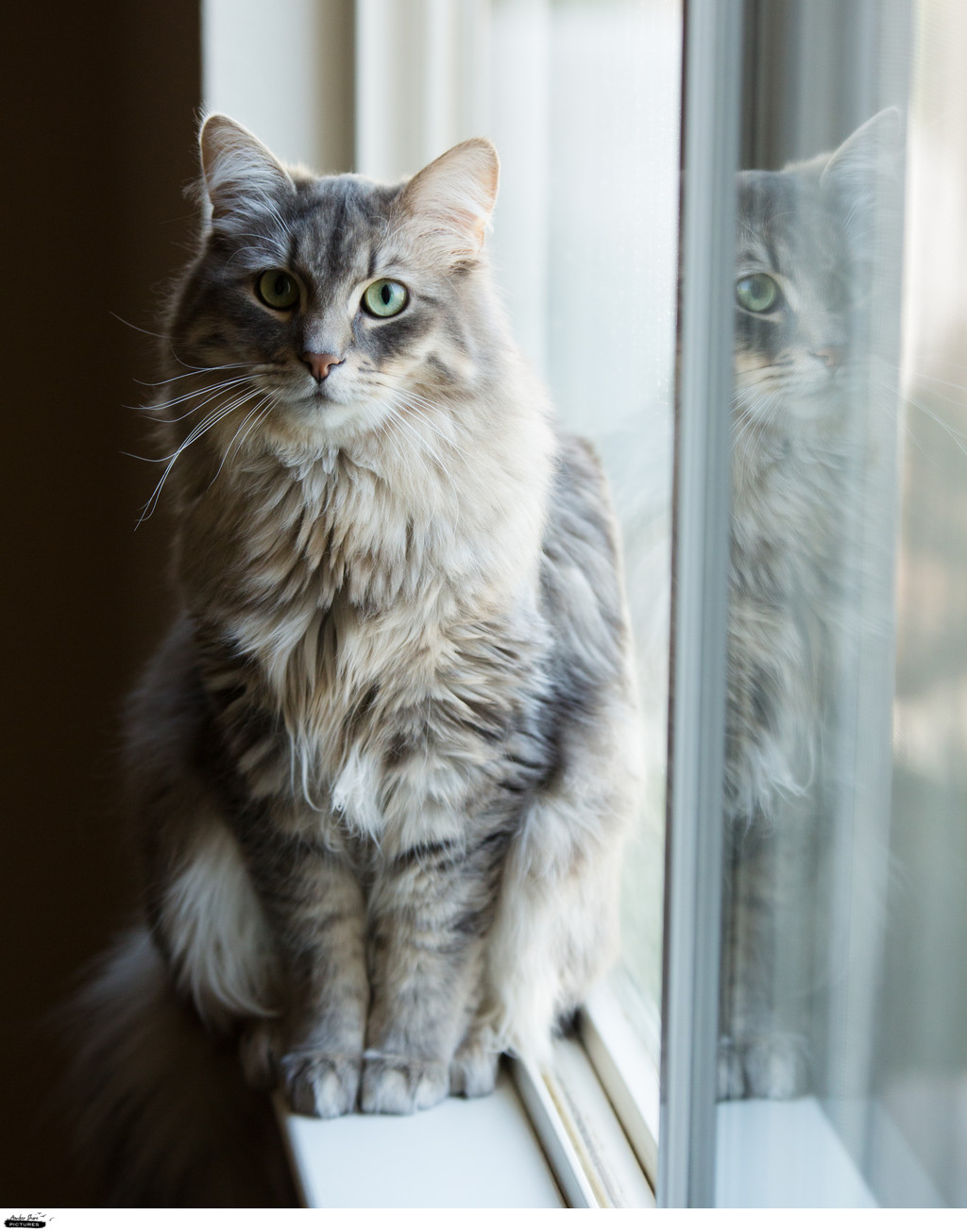 Reno Pet Photographer Modern Cat Personality Portrait