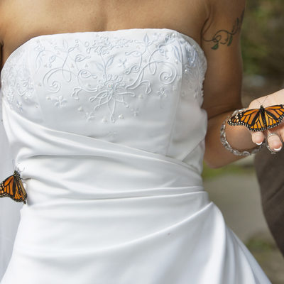 Butterfly Bride Wedding Photographer in New Hope