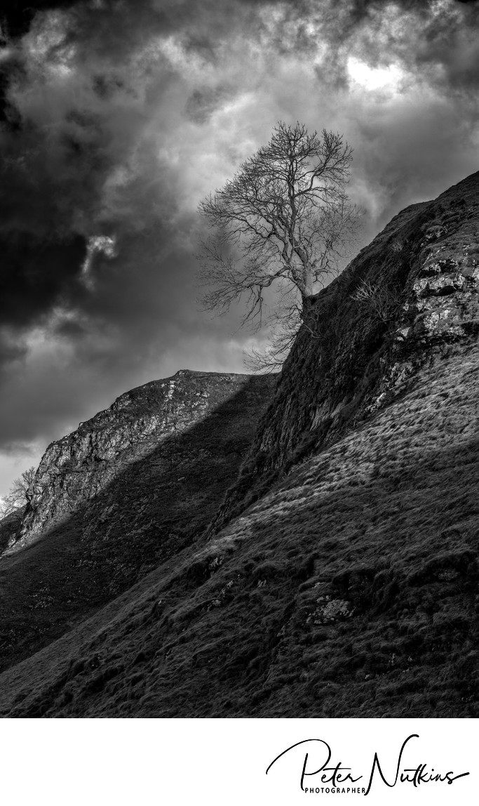 Hold On! Tree Above Cave Dale