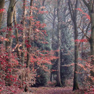 Autumn In Martinshaw Woods