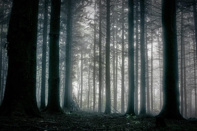 Forest Mist In The Early Morning