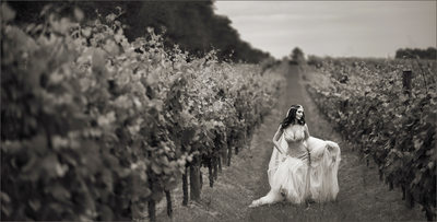 Wedding Photo of Bride in Winery