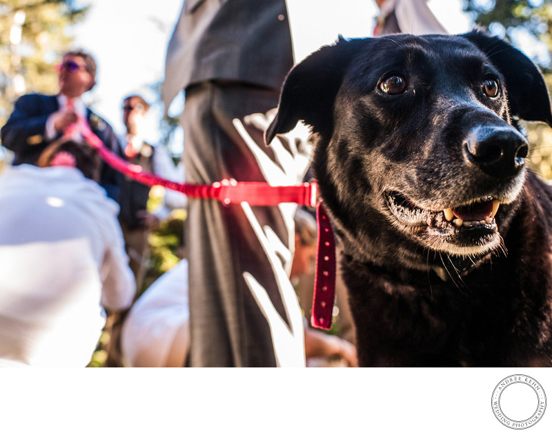 best wedding dog photos