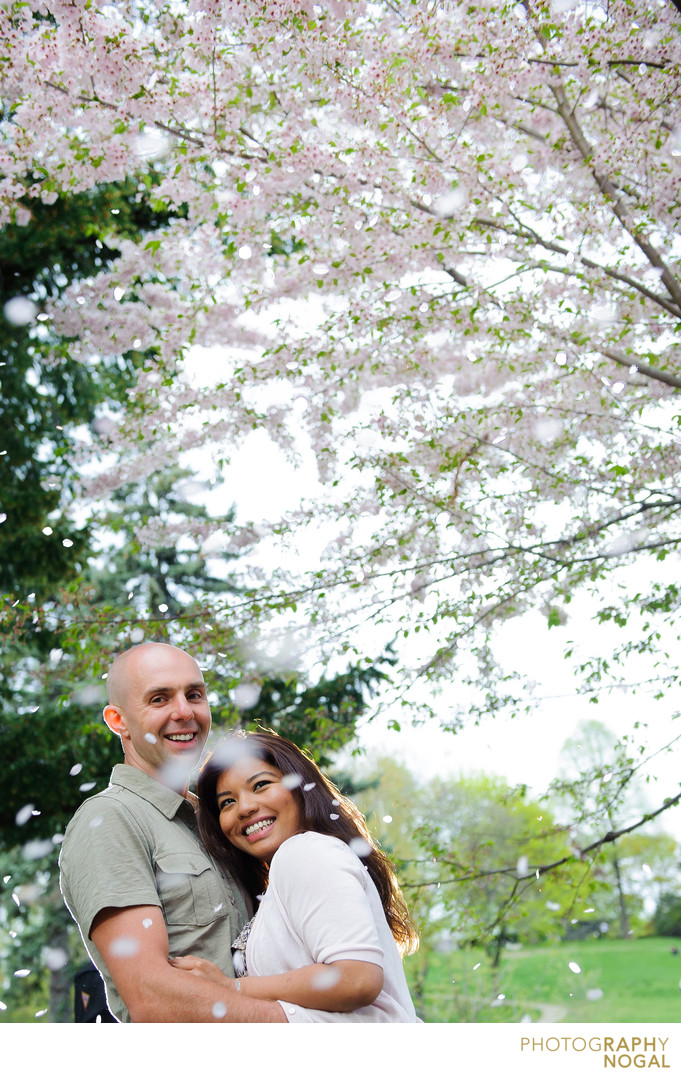 Cherry Blossoms in High Park During Engagement Shoot