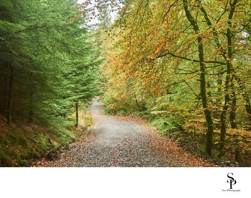 Country Lane near Newton Stewart Dumfries and Galloway